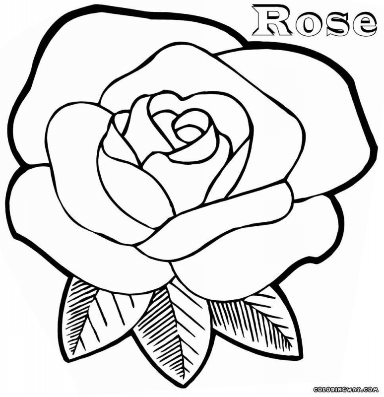 774x800 Rose Drawing Color Coloring Pages Roses Getitright Coloring