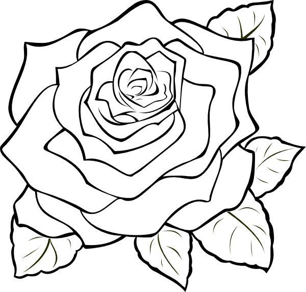600x572 Sensational Roses To Color Purple Rose Drawing At Getdrawings Com