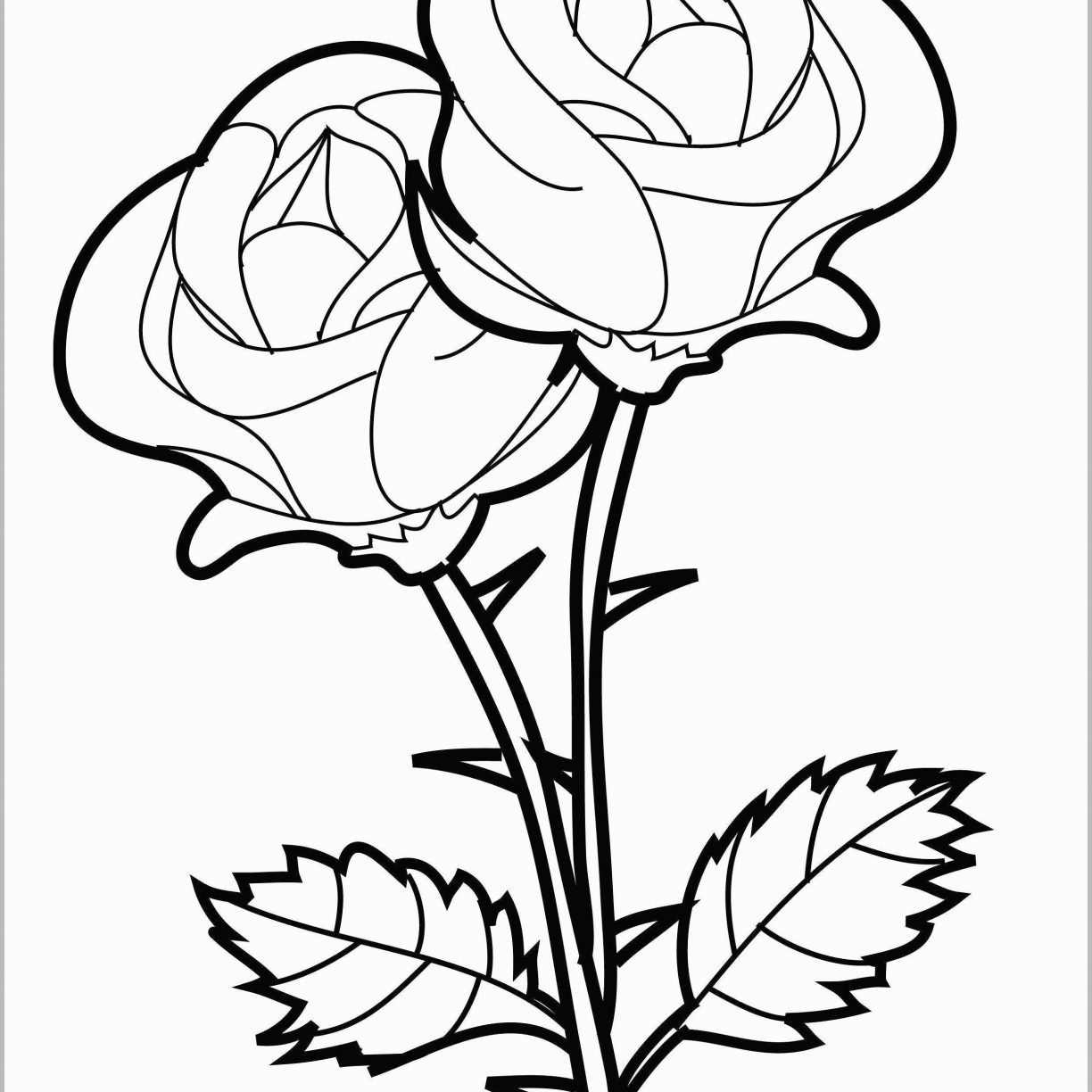 1224x1224 Wonderful Rose Garden Coloring Pages At Getcolorings Com Free