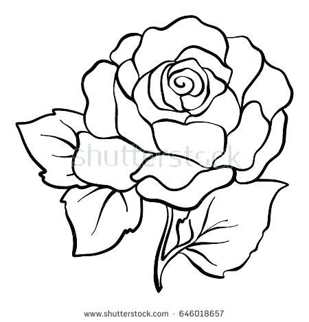 450x470 Rose Drawing Easy