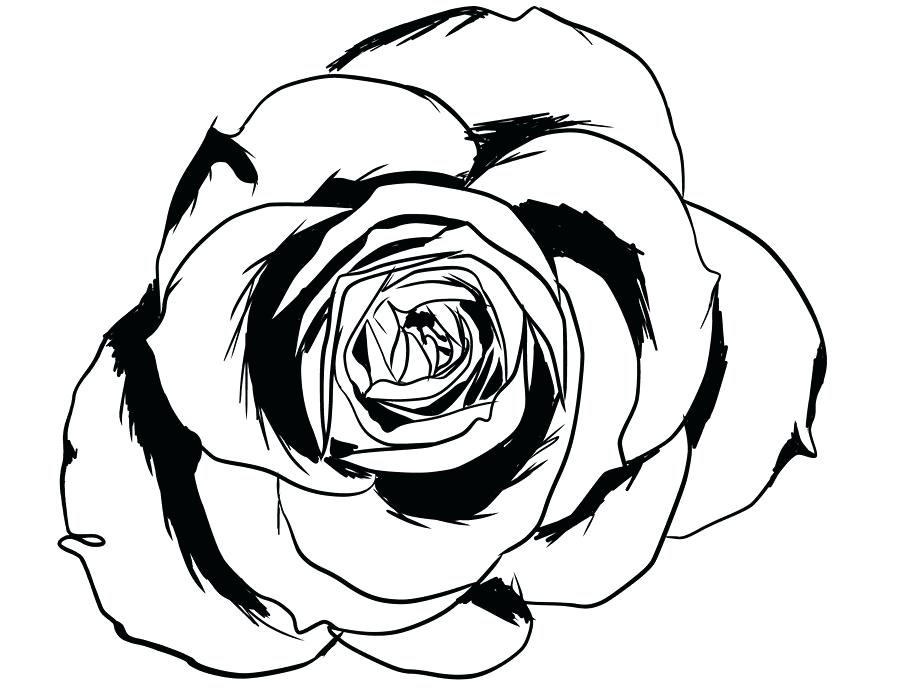 900x695 Rose Line Drawing