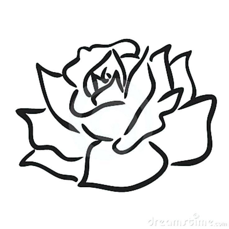 736x736 Easy Drawings Of Roses Step