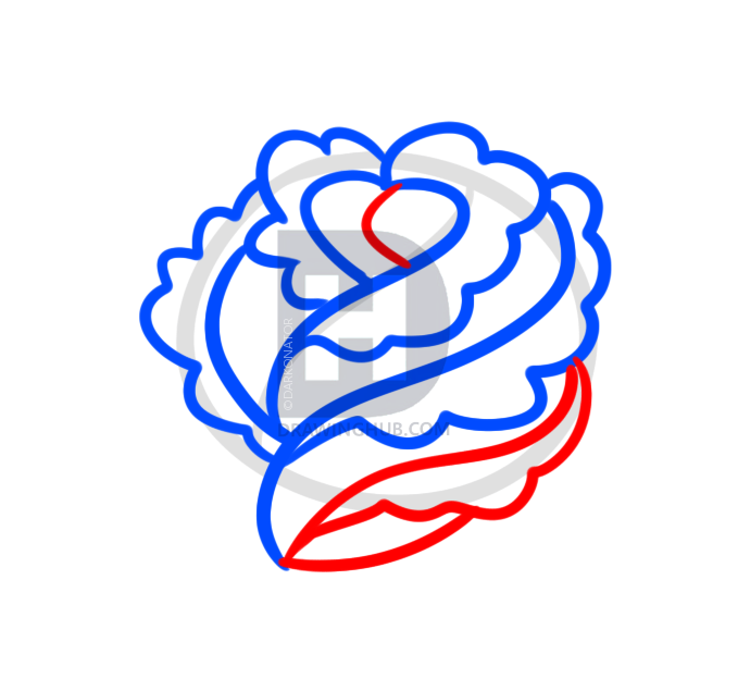 679x635 How To Draw A Rose For Beginners, Step