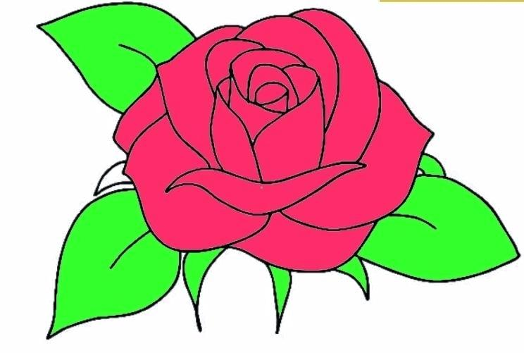 744x501 Rose Easy To Draw How To Draw A Rose Easy Step Easy Rose Drawing