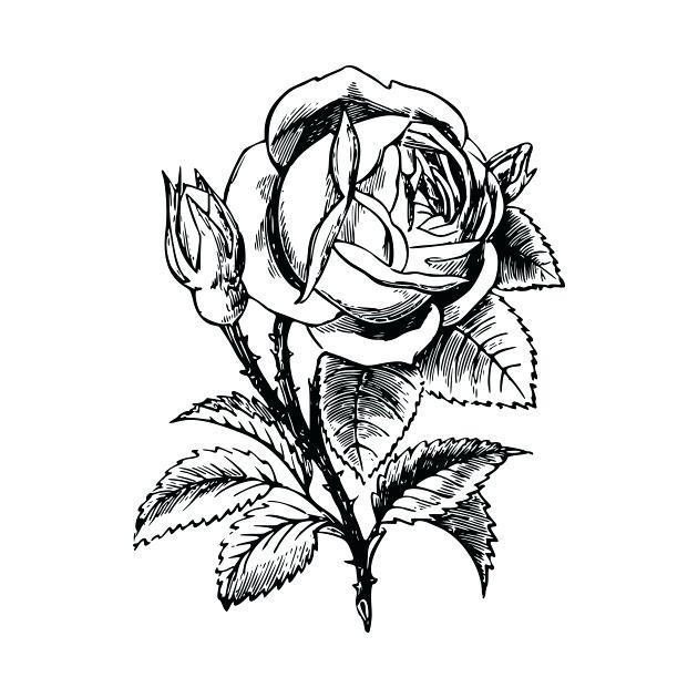 630x630 Drawing Flower Rose