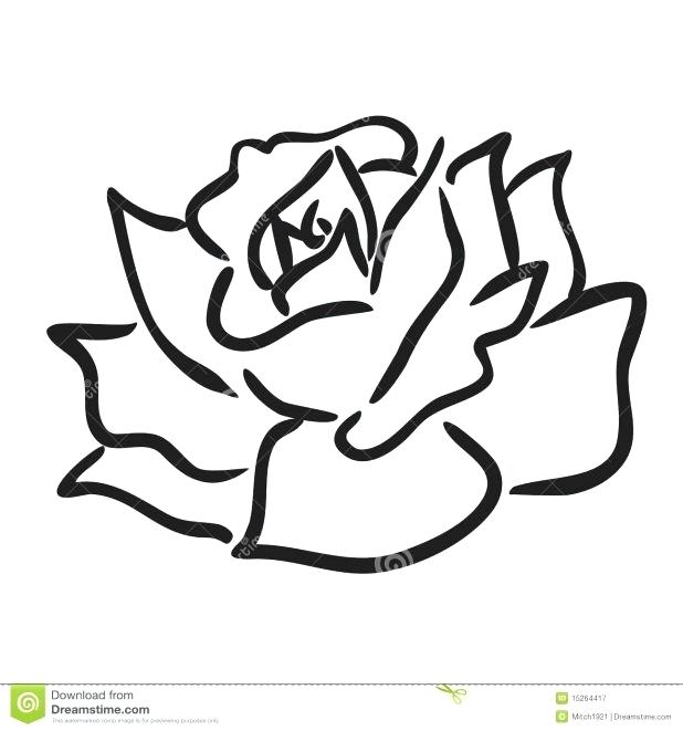 618x661 How Do You Draw A Simple Rose