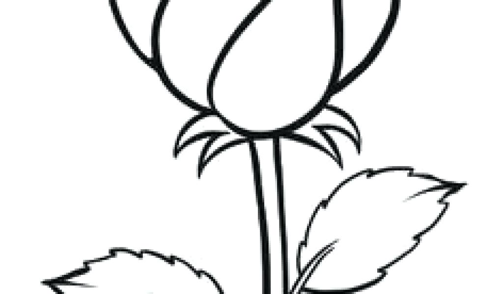 1024x600 Easy Drawing Of A Rose Cool Drawings Of Roses And Flowers Easy