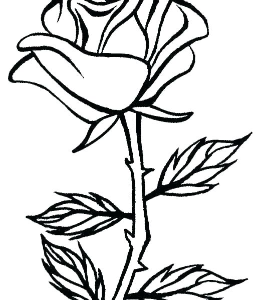 531x600 Printable Roses Rose Drawing For Kids Free Printable Roses