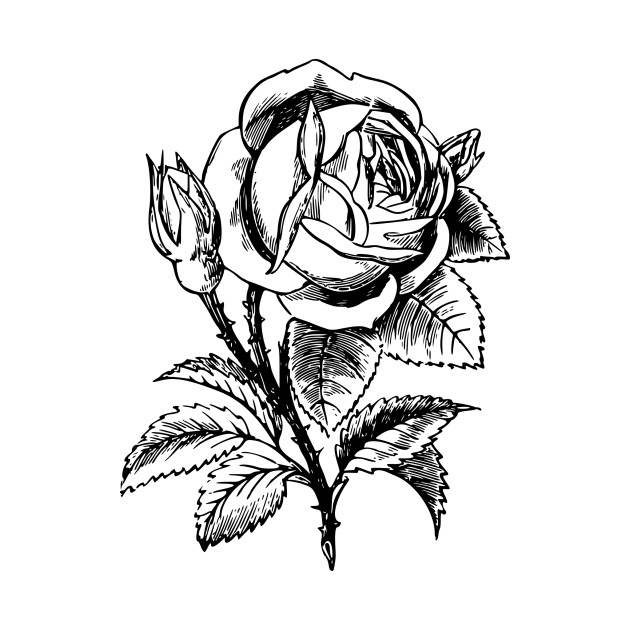 630x630 Rose Drawing