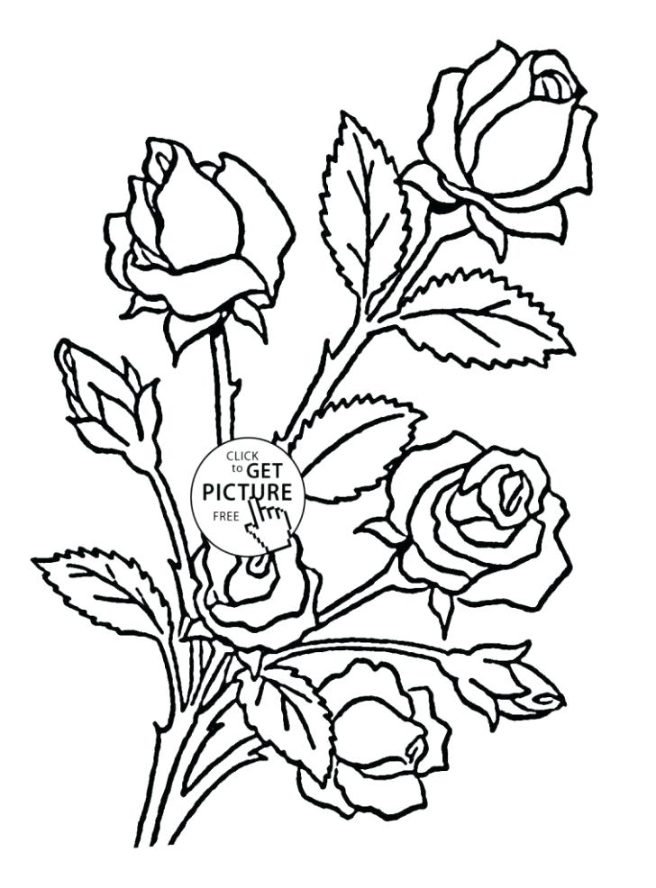 728x986 Coloring Pages Draw A Rose For Kids Coloring Pages Flower Archives