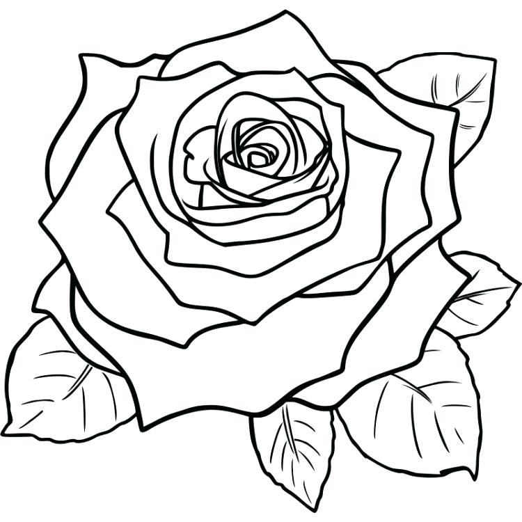 750x750 How To Draw A Rose Step