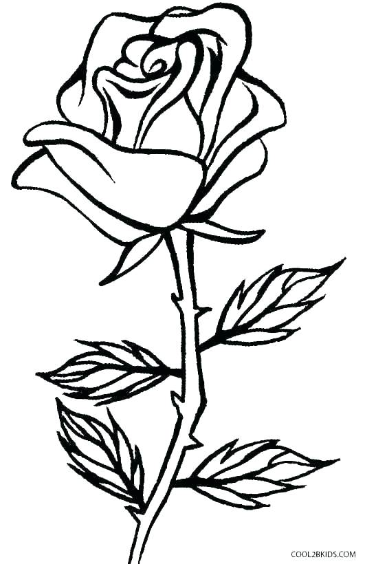 531x820 Drawing Of Rose For Kids Drawing Of Roses How To Draw A Rose Easy