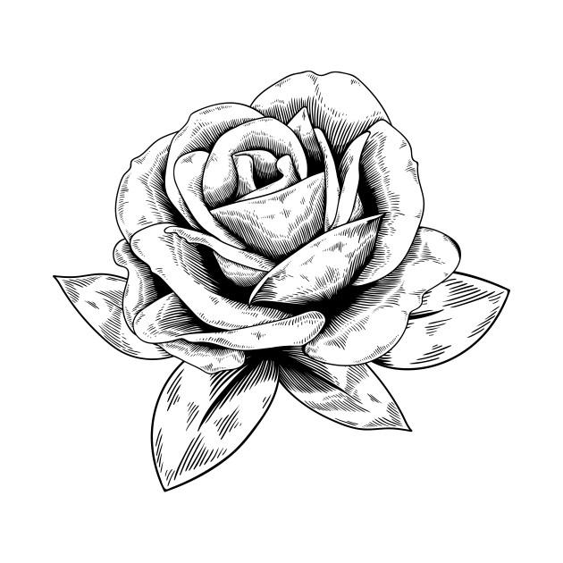 630x630 Rose Drawing