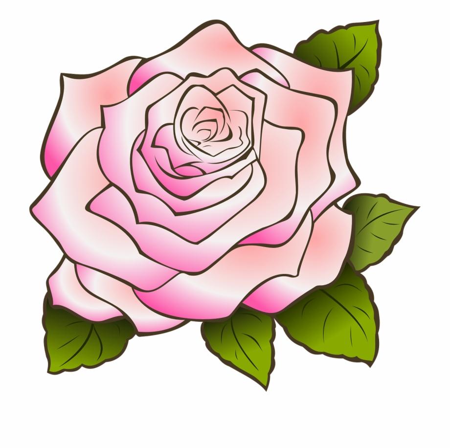 920x916 Rose Drawing Vintage Pink Png Image