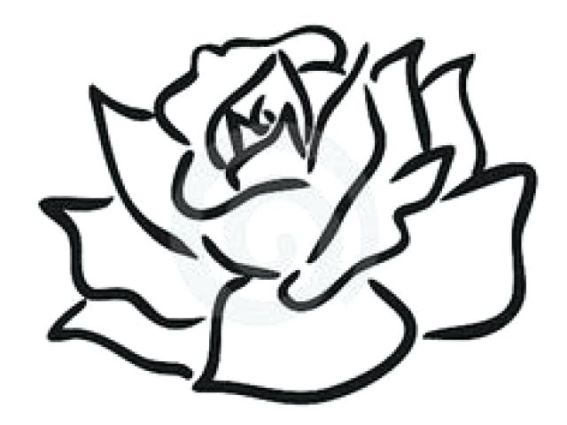 640x480 Rose Easy Drawing Open Rose Drawing Easy Step