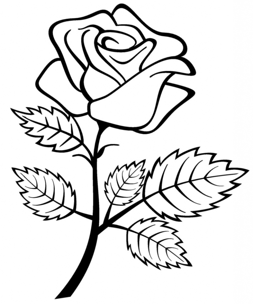 851x1024 Rose Flower Drawing Free Download Clip Art