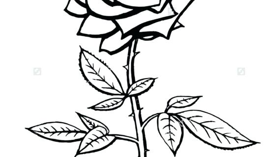 570x320 Rose Line Drawing Clip Art Rose Line Drawing Tattoo Library