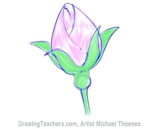 550x447 Simple Rose Bud Drawing Beautiful Rose Drawing Simple Rose Bud