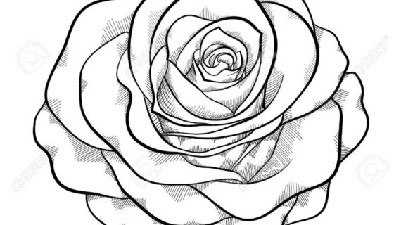 570x320 Rose Drawing Drawings Of Roses In Black And White Free Download