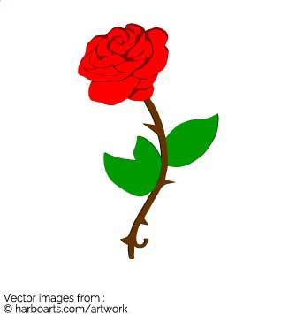 335x355 Download Red Rose
