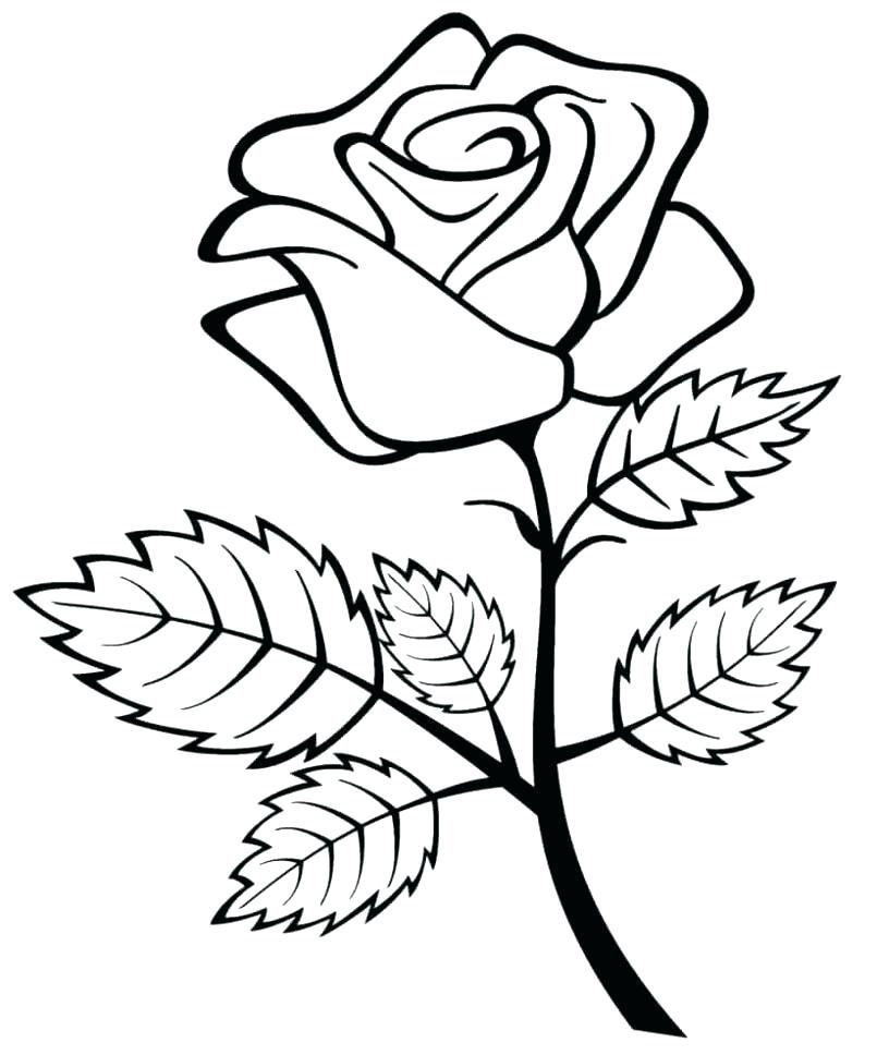 805x968 Rose Drawing For Kids
