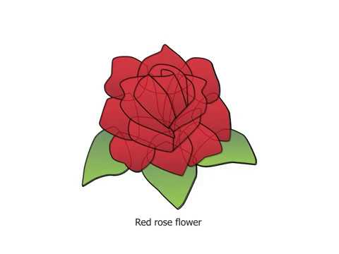 480x360 Drawing Red Rose Flower,drawing For Kids Step