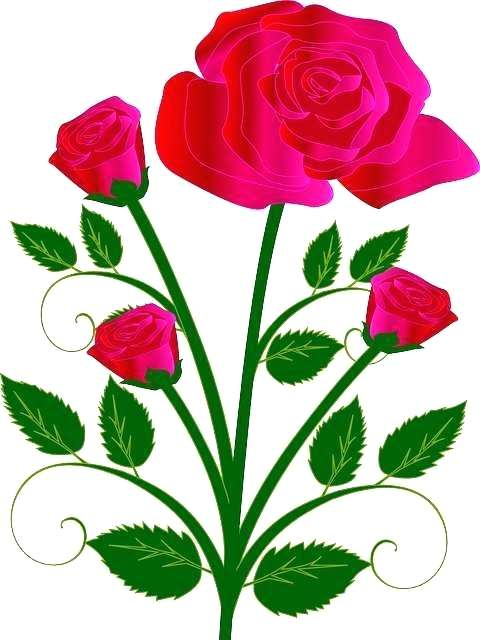 480x640 Easy Rose Drawing Easy Rose Drawing Rose Flower Drawing Easy Step
