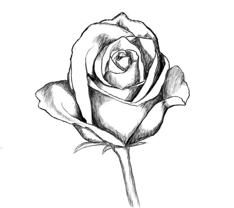 758x674 How To Draw A Rose Step