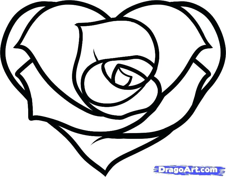 738x580 Rose Drawing Simple Rose Drawing Easy Simple Flower Drawing Step