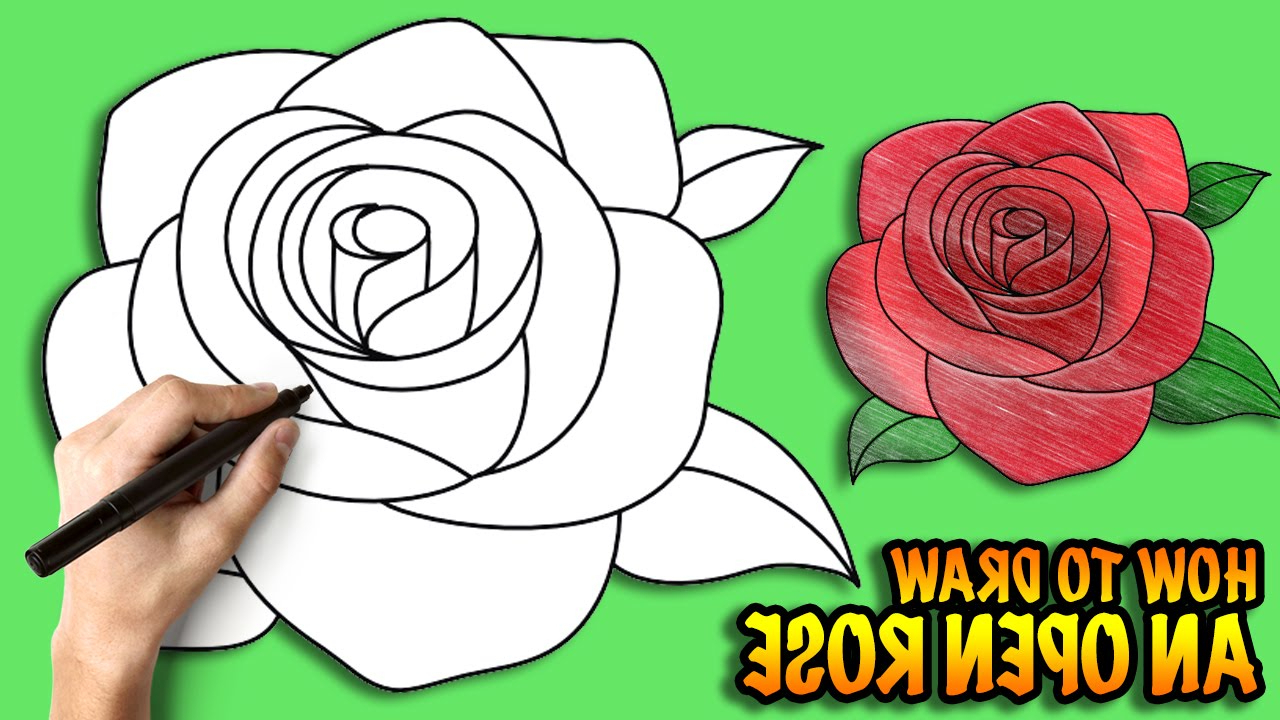 1280x720 Collection Of 'open Rose Drawing Step