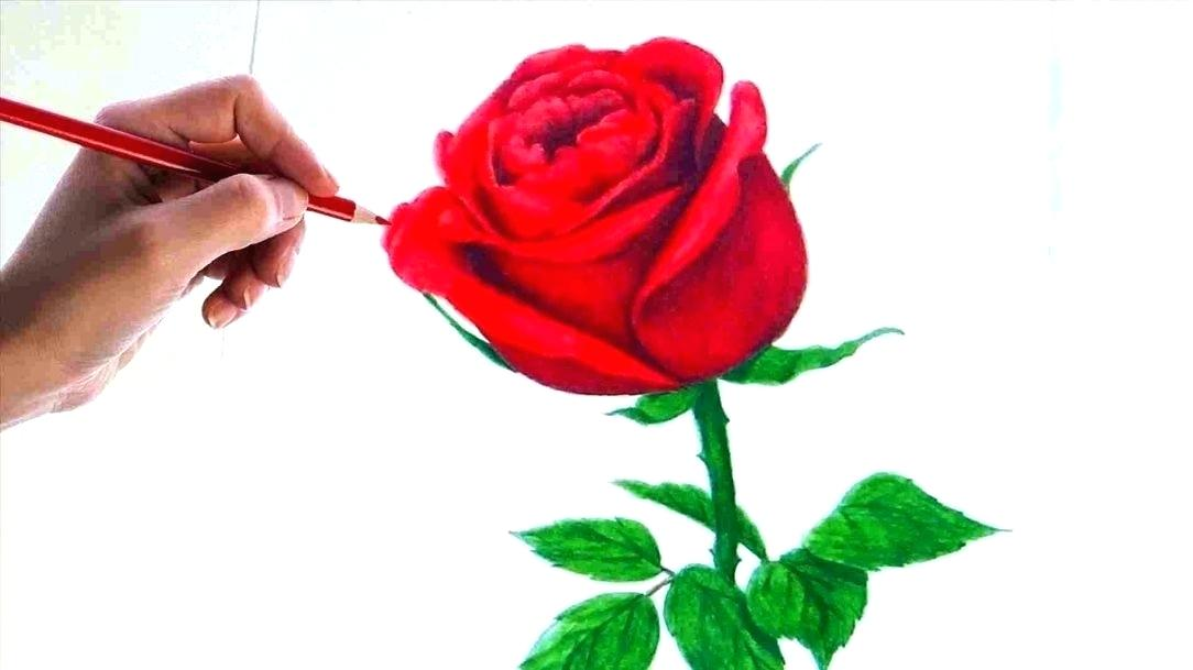 1084x609 Simple Rose Drawing Drawing Step