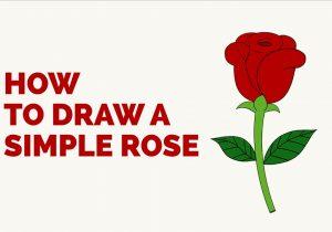 300x210 Simple Rose Drawing Step