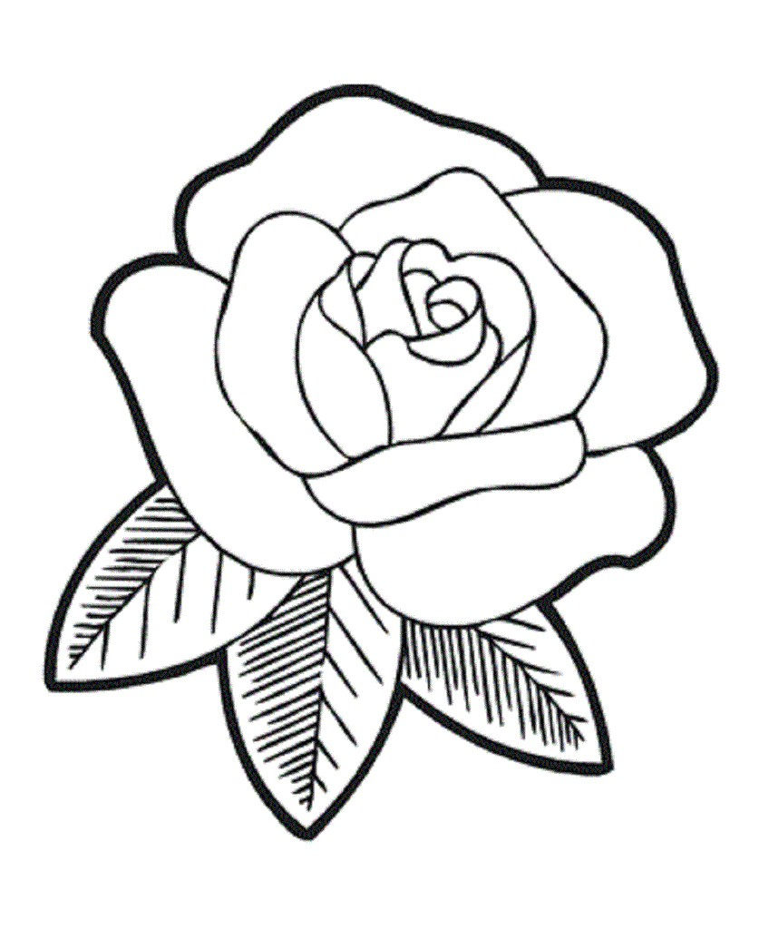 837x1024 Simple Rose Flower Drawings Rose Flower Drawing Instructions