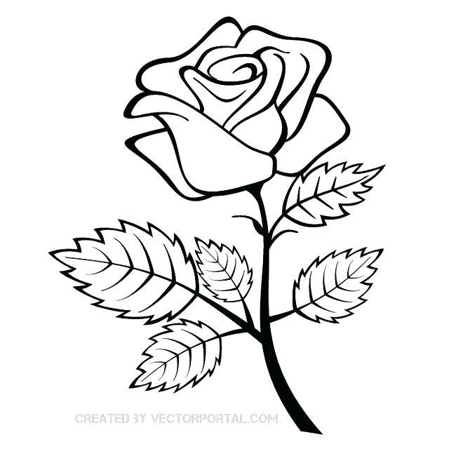 660x660 Simple Roses Drawings Drawn Flower Simple Simple Rose Drawing