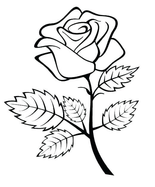 521x626 A Simple Rose Drawing