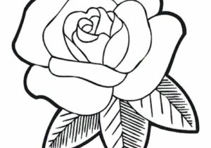 300x210 Easy Drawing Roses How To Draw A Rose