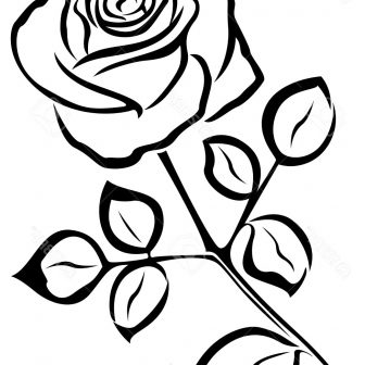 336x336 Free Black White Flower Drawing And Pencil Tumblr Lily Beautiful