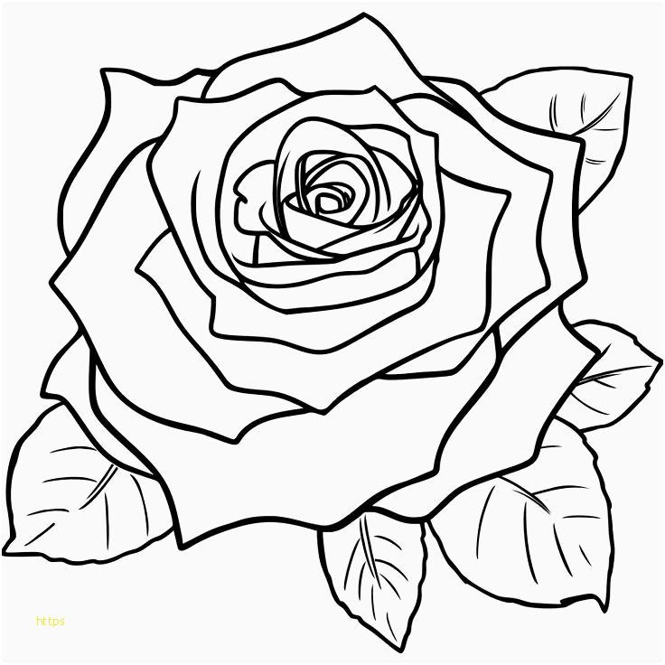 736x736 Vintage Rose Wallpaper New Vintage Roses Wallpaper Tumblr