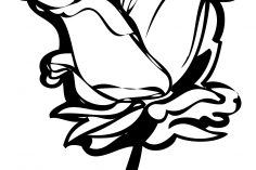 236x157 Black And White Drawing Of A Rose Tumblr Flowers Border Line