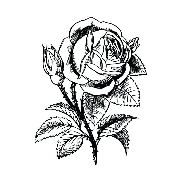 630x630 Drawing Flower Rose A Drawing Flowers For Kids And Black Rose