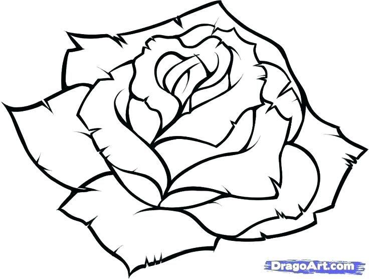 736x556 Easy Flower To Draw Easy Flower Drawings In Black And White