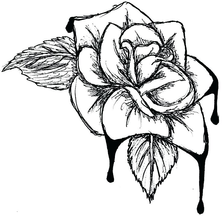 736x718 Flower Drawing Clip Art Blood Cabbage Rose Flower Vase Drawing