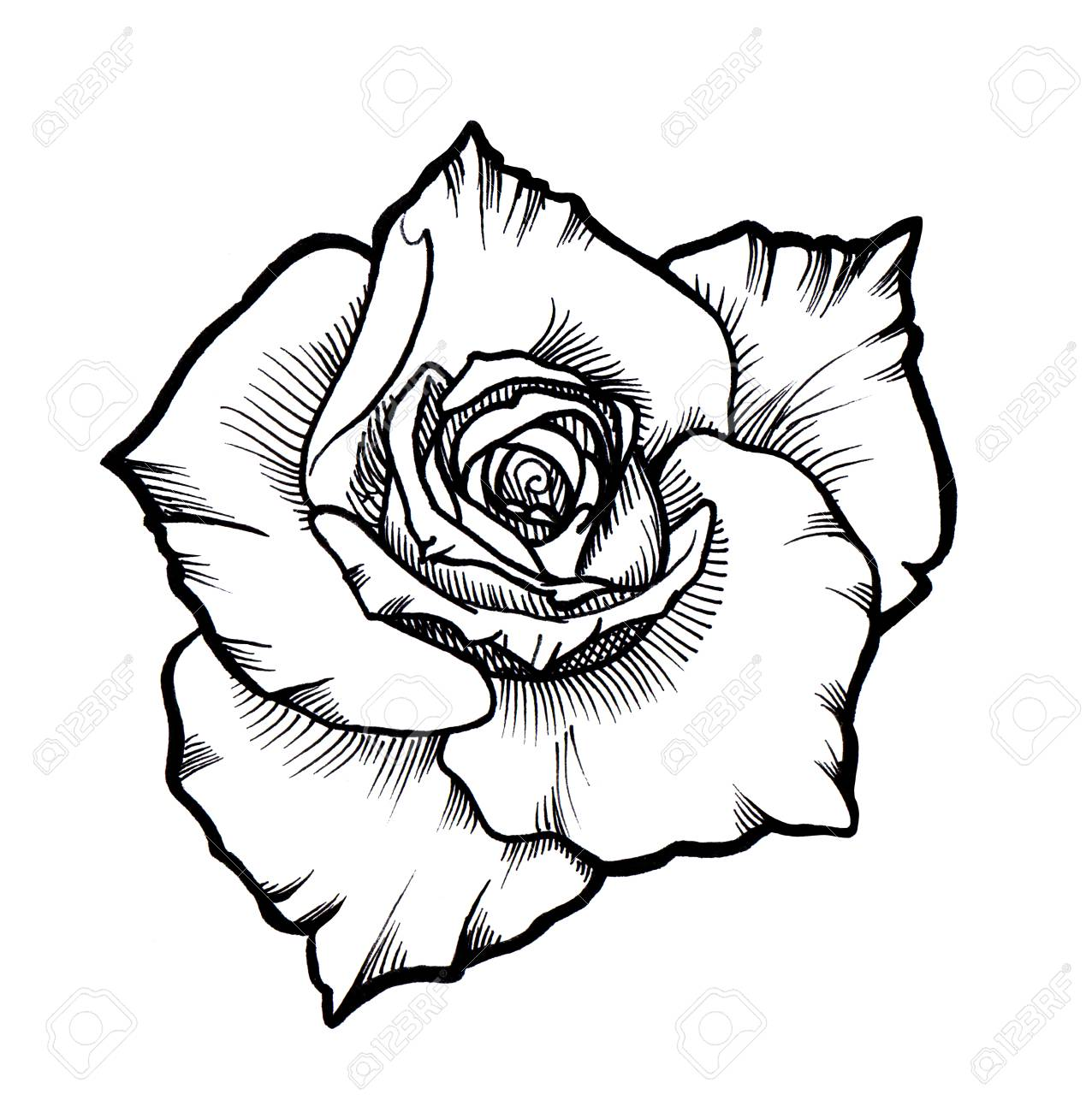 1276x1300 Huge Collection Of 'black And Grey Rose Drawing' Download More