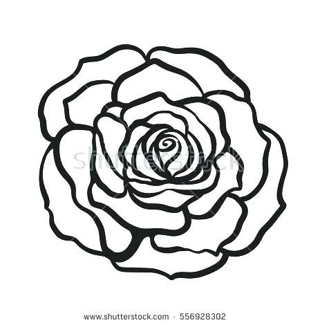 450x470 Rose Drawn Black And White Rose Drawing Tattoo