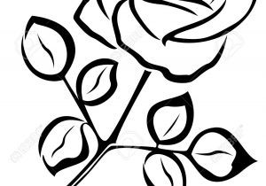 300x210 Rose Flower Black And White Drawing Outline Of Drawing