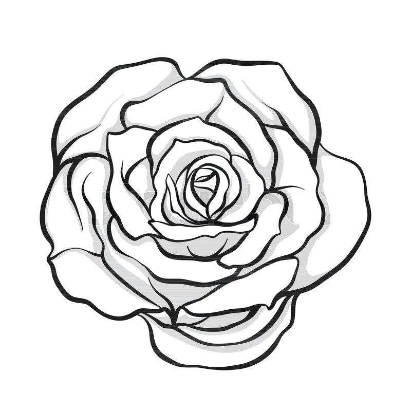 800x800 Rose Flower Outline Flower Drawing Outline Coloring Pages