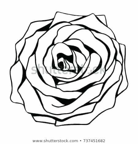 450x470 Rose Flower Outline Rose Flower Outline Vector Isolated On White