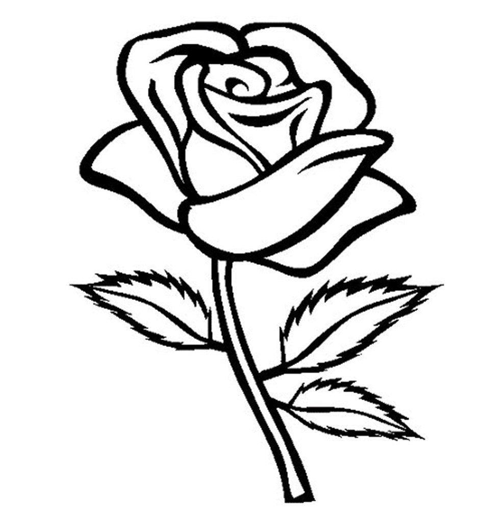 982x999 Rose Flowers Images For Drawing