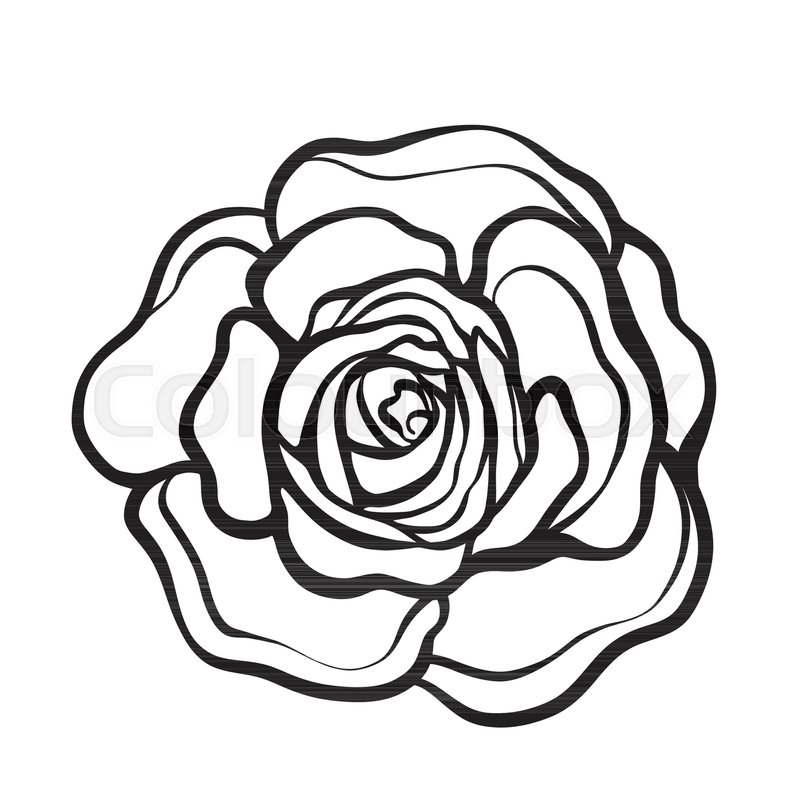 800x800 Rose Flower Isolated Outline Hand Stock Vector Colourbox