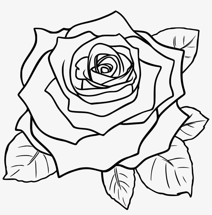 820x831 White Rose Clipart Line Art Flower Black And Entertaining Free